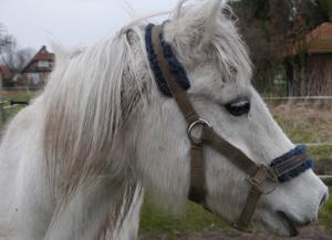 Westly, Pferd Altenheim, Schillerslage Pflegeheim